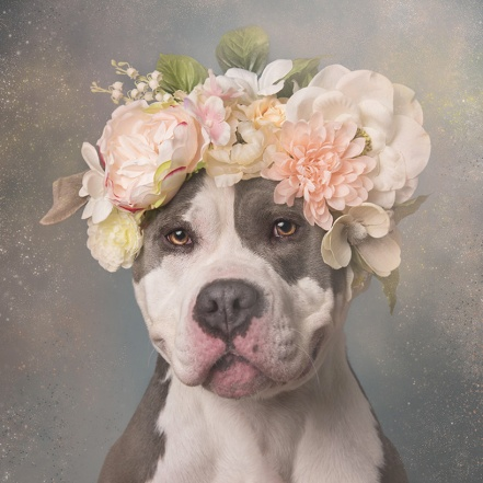 image of a pit bull dog wearing a flower garland
